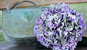 fiorista treviglio ortensie