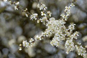 fioristi Crema