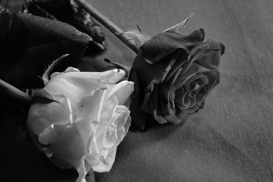 rosa nera significato